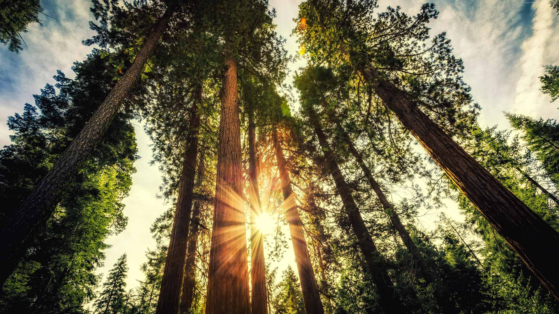 Verniciatura di pavimenti in legno, rispetto della natura, prodotti sani per la tua casa e la tua famiglia